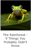 the rainorest - 9 things you probably didn't know