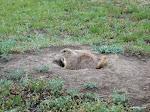 Prairie Dog, Wyoming  [2005]