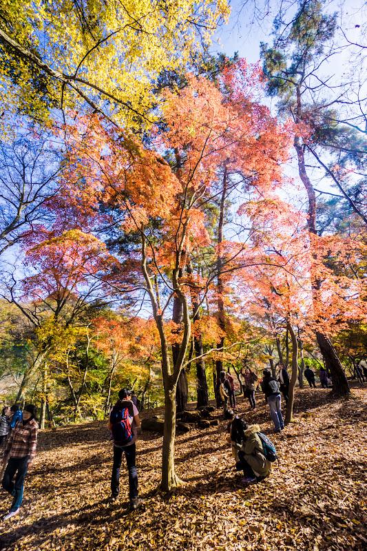長瀞 月の石もみじ公園 紅葉3