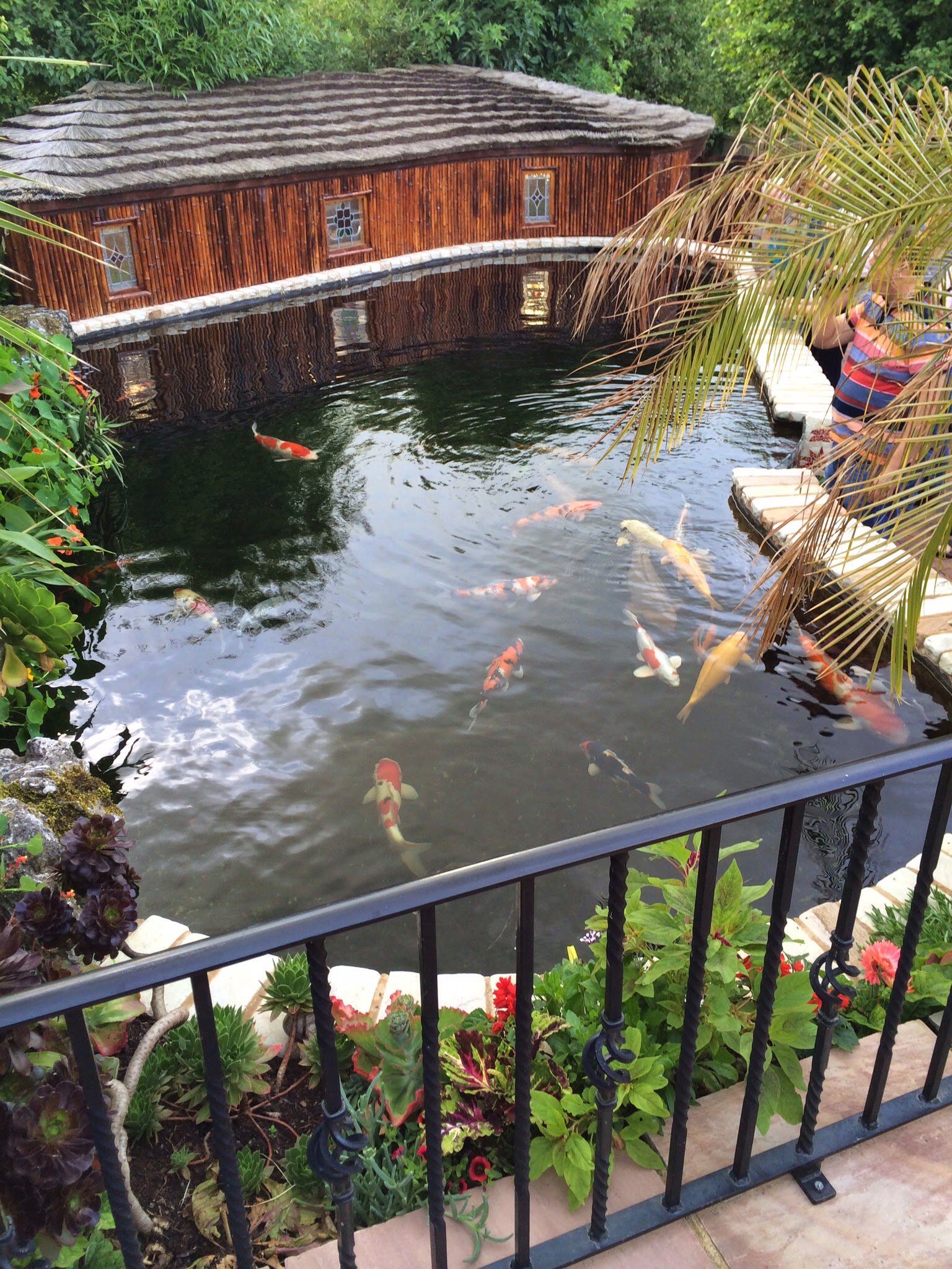 July 2014 club night at paul randall 39 s pond and gardens for Koi holding pool