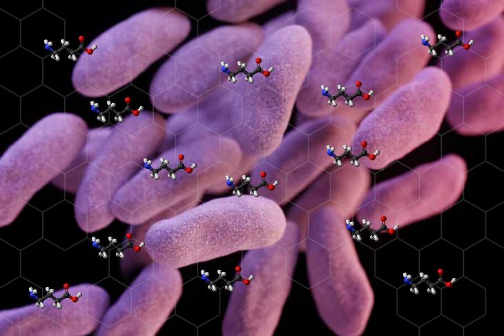 Bactéria GABA