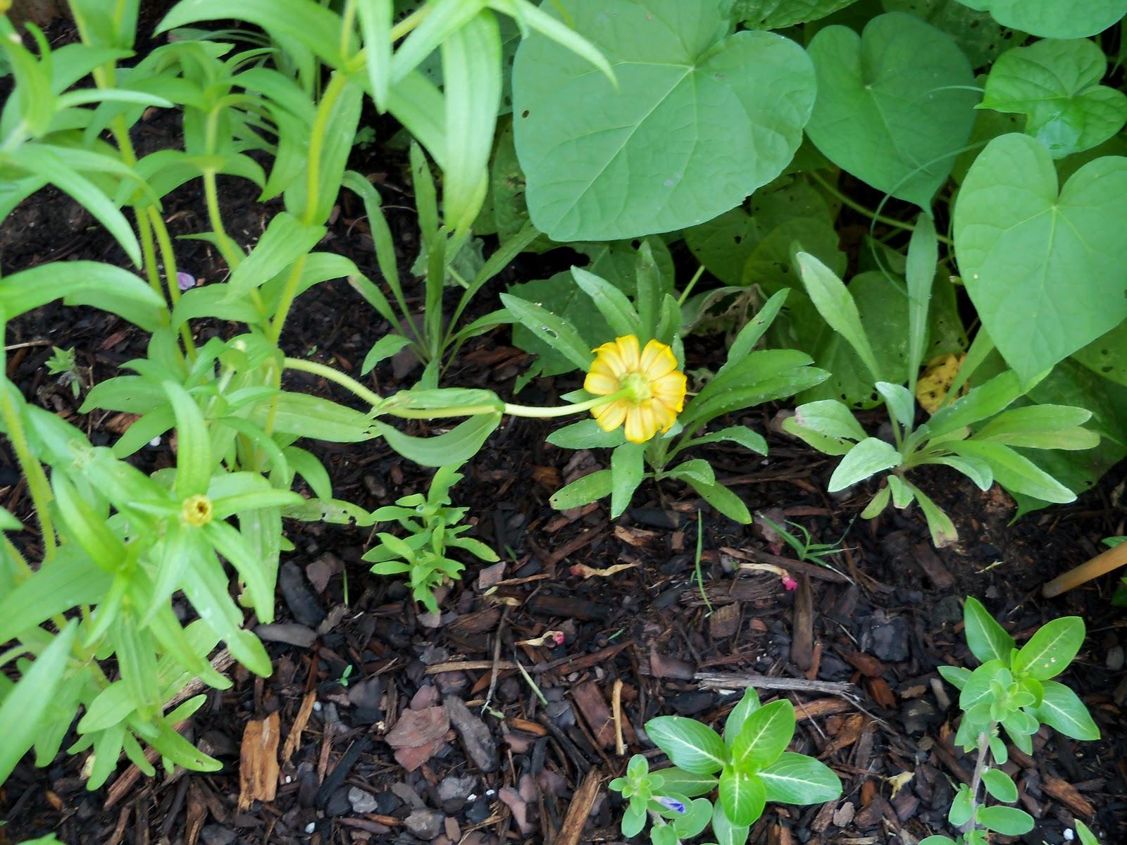 Gardening 2010, Part Two - 101_3360.JPG