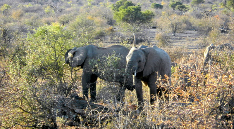 Tuli Block - elephants