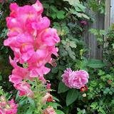 Gardening 2012 - 115_1357.JPG