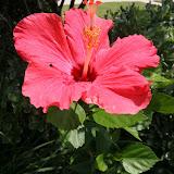 Gardening 2012 - IMG_3851.JPG