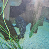 Downtown Aquarium - 116_3989.JPG
