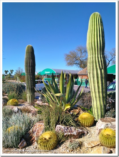 151230_Tucson_Mesquite-Valley-Growers_0003