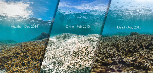 This composite picture shows a reef in American Samoa before, during, and after a coral bleaching event in 2015. Photo: XL Catlin Seaview Survey