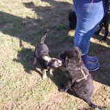 Kleinhundespielstunde am 04.03.2007