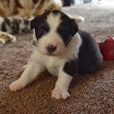 Pups Gina dag 18