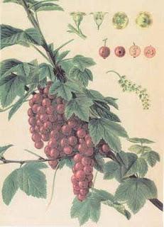 newredberries.jpg
