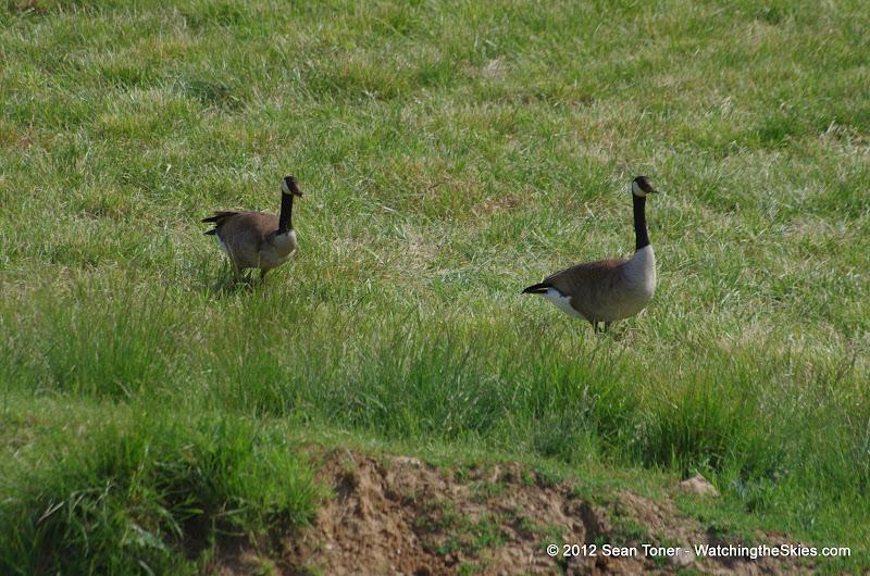 05-11-12 Wildlife Prairie State Park IL - IMGP1565.JPG