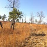 Hunting Habitat 8, Anderson Creek