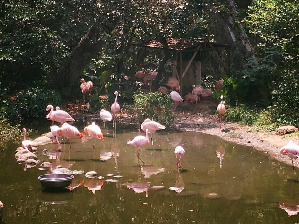 taipei zoo taiwan travel