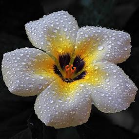 by Benny Sugiarto Eko Wardojo - Nature Up Close Flowers - 2011-2013