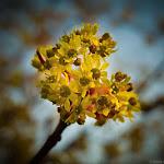 Spring (3 of 25).jpg