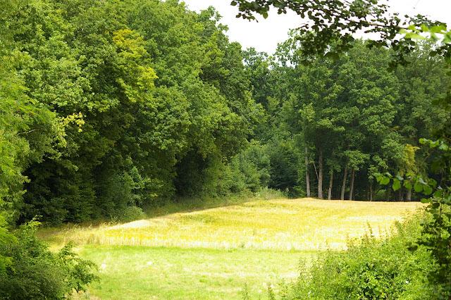 Forêt et champ, biotopes de nombreuses espèces. Les Hautes-Lisières, 10 juillet 2009. Photo : J.-M. Gayman