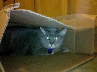 Gus-in-a-box