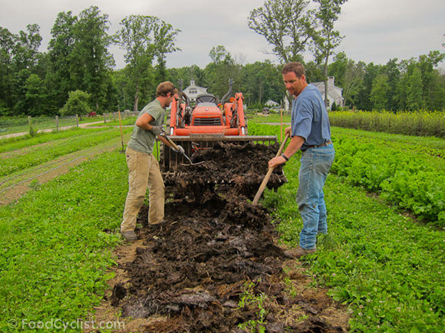 Organic farmers spread manure in a field. Photo: FoodCyclist.com