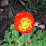 Gardening 2011 - 100_7347.JPG
