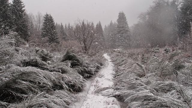 Auvergne 2014