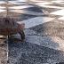 Hướng dẫn sổ giun sán cho rùa Núi vàng