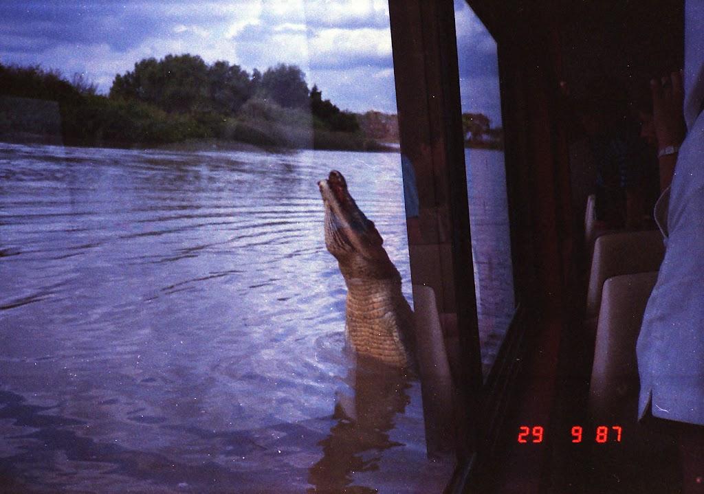 5970Adelaide River Croc Tour