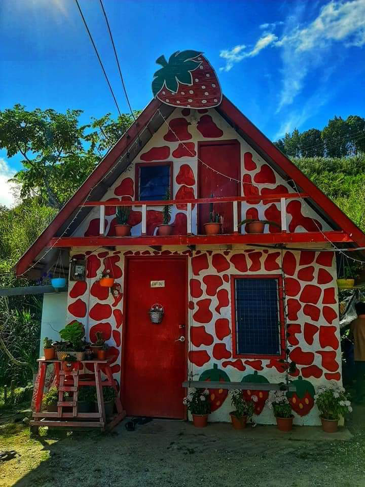 Berries Residents homestay antara yang tercantik di Kundasang
