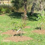 Hammo Planting - Shannon Schiesser - IMG_4949.JPG