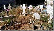 Le erbacce al Cimitero di Miano