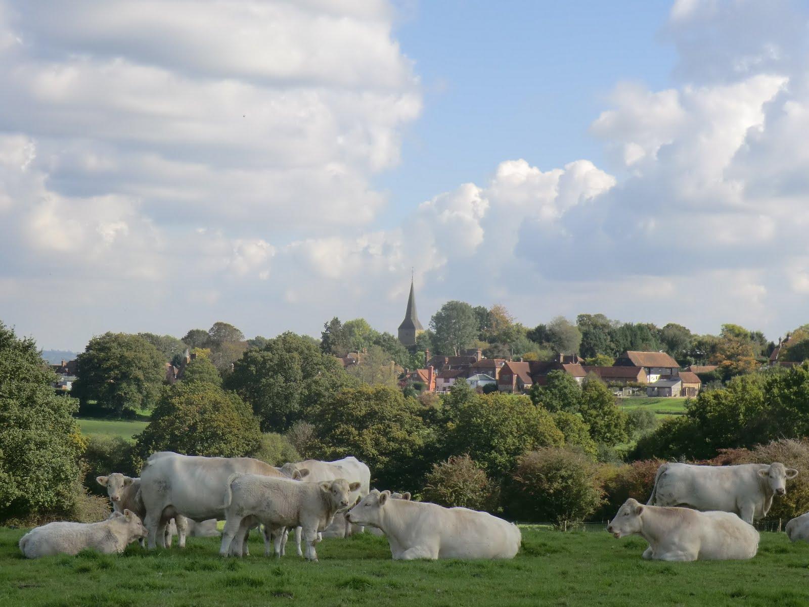 CIMG0704 View of Hartfield
