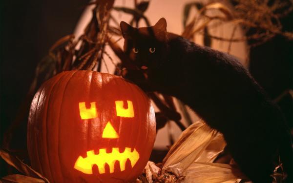 Halloween Night, Halloween