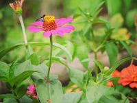 Sari Bunga yang Pahitpun Menjadi Manis Berkat Shalawat