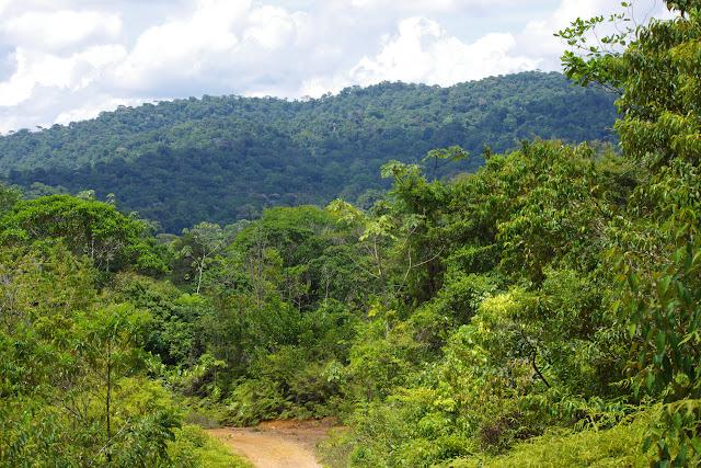 La piste vers les Carbets de Coralie (Crique Yaoni), 1er novembre 2012. Photo : J.-M. Gayman
