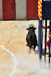 peña taurina 2013 042.JPG