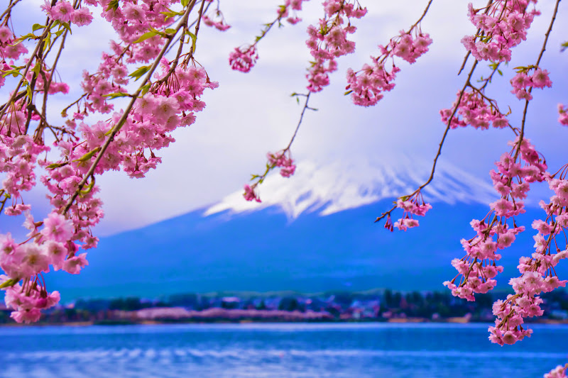 Lake kawaguchiko, cherry blossoms, Mt Fuji, Nagasaki Park 2