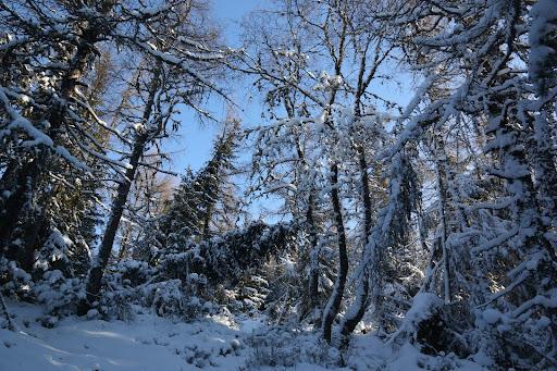 Končiaci les