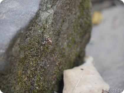 Can you spot the insect?