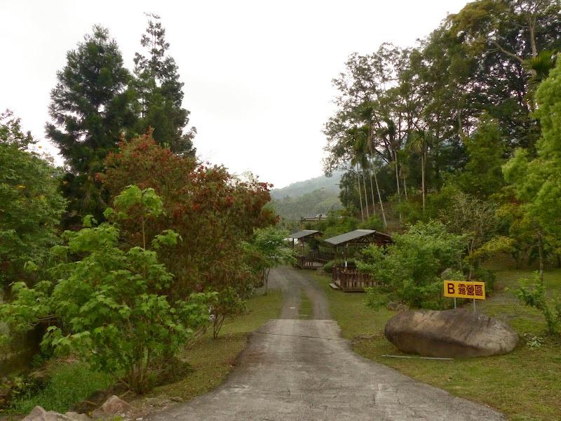 Puli, Nantou county, cueillette de thé - P1050657.JPG