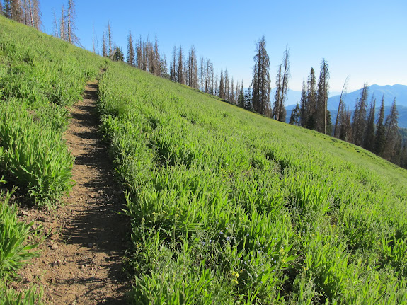 Trail traversing a grassy slope