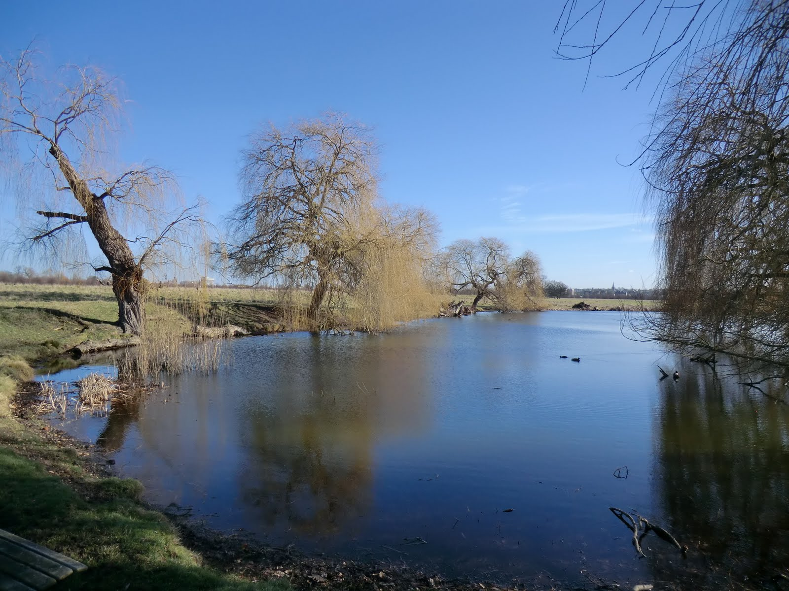 CIMG6712 Oak Pond, Home Park