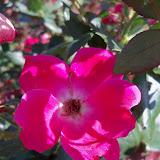 Gardening 2011 - 100_9166.JPG