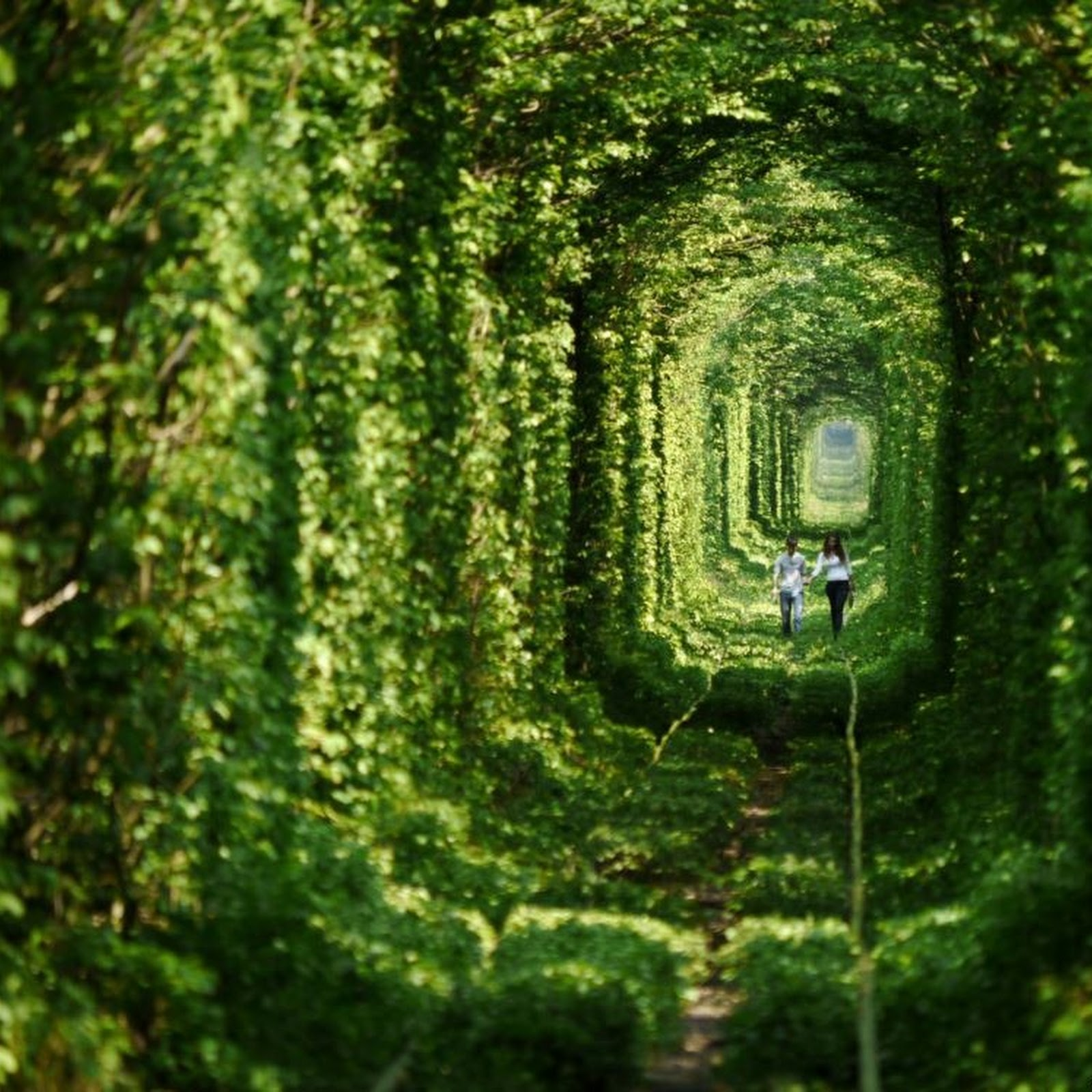 "The Story Behind Ukraine's ""Tunnel of Love"""