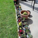 Gardening 2010, Part Three - 101_3893.JPG