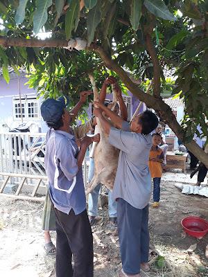Deddy Heran Banyak Masyarakat Tidak Suka Daging Domba