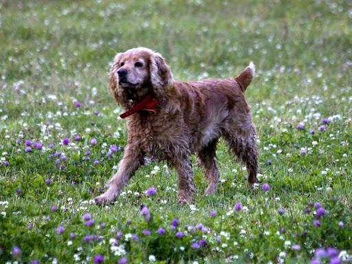 Приятный бизнес без стрессов - Выгул собак