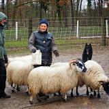 Harkan et ses moutons