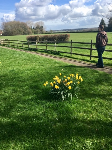 Fields and Daffodils