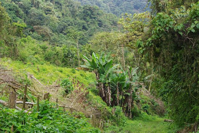 Vallée du Rio Guallupe, 1800 m (Imbabura, Équateur), 2 décembre 2013. Photo : J.-M. Gayman