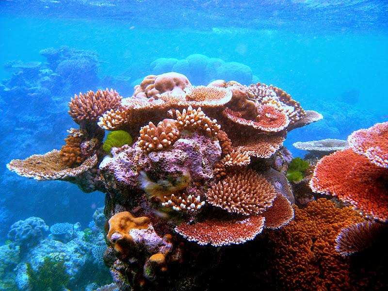 산호초상처